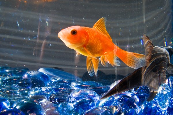 do fish sleep interesting facts